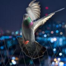 madárvédő modul